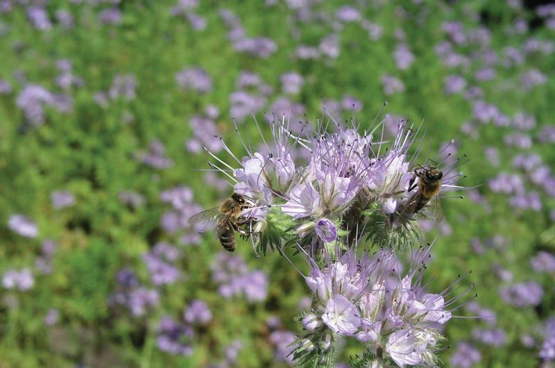 O Tym Jakie Rosliny Warto Zasiac Dla Pszczol I Innych Owadow Zapylajacych Miod Kupujesz Pszczoly Ratujesz