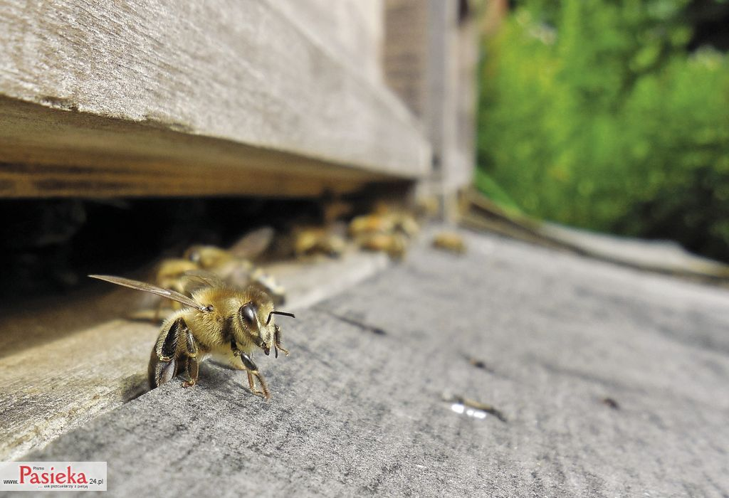 bees-1475704_1920