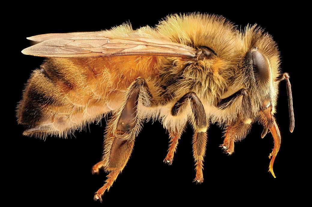 Beneficiile mierii de albine. 10 afecțiuni în care mierea face adevărate minuni